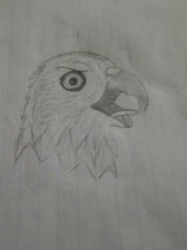 10 year old girl drawing of a bald eagle