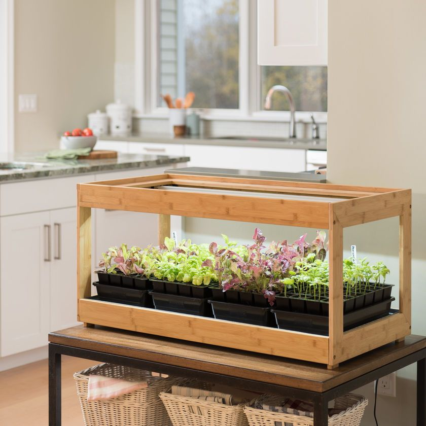Everything You Need to Grow an Indoor Herb Garden Led