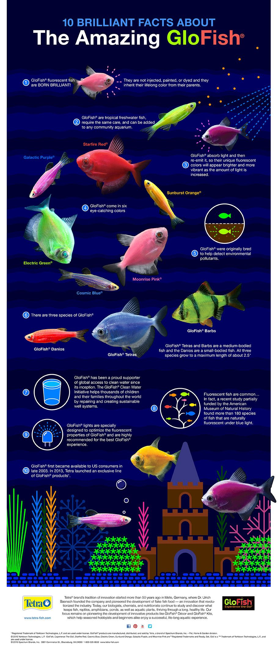 10 Brilliant Facts About The Amazing Glofish Infographic