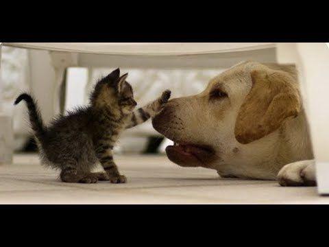 Lustige Katzen Und Hunde