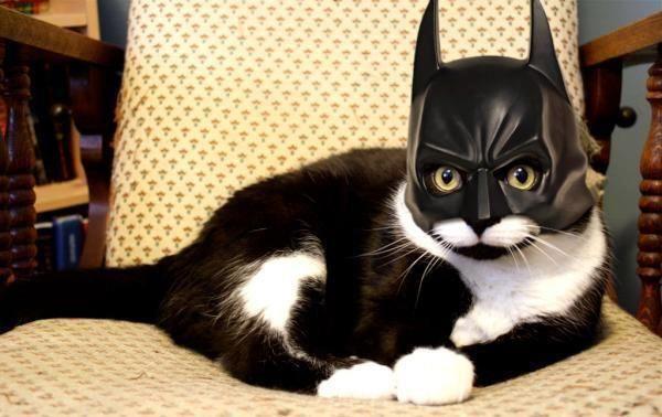 the dark kitty