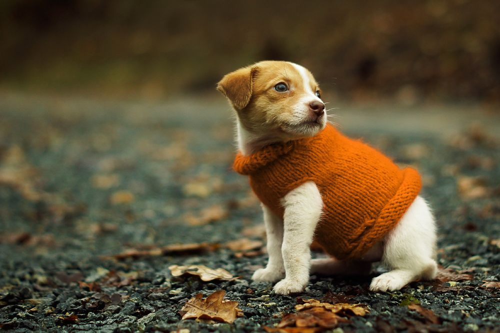 Sweater Weather Baby Dogs Cute Animals Cute Puppies