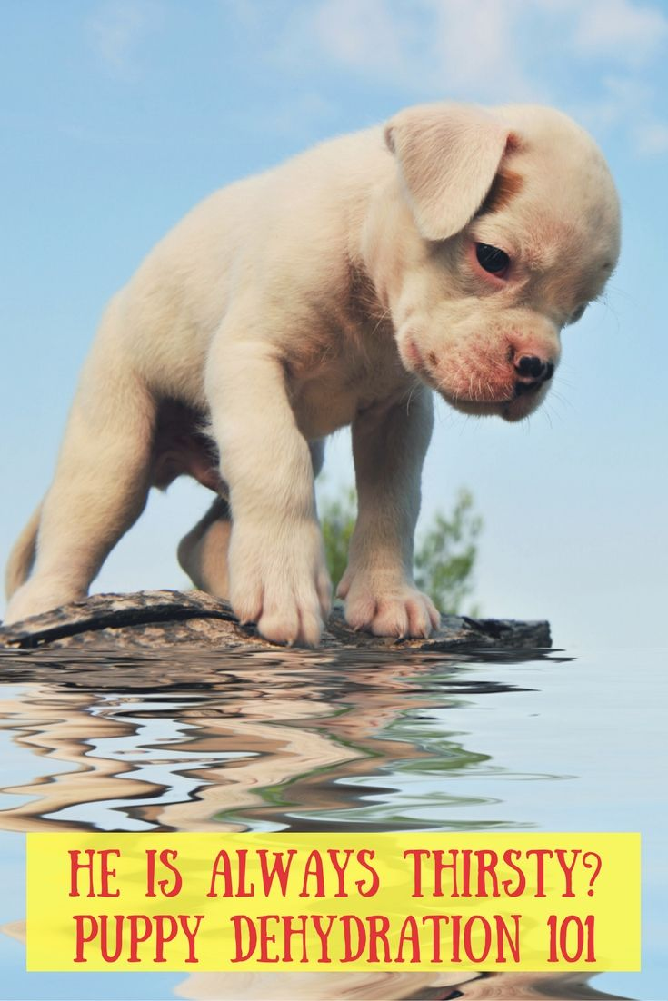 How much water should a puppy drink a day puppies when
