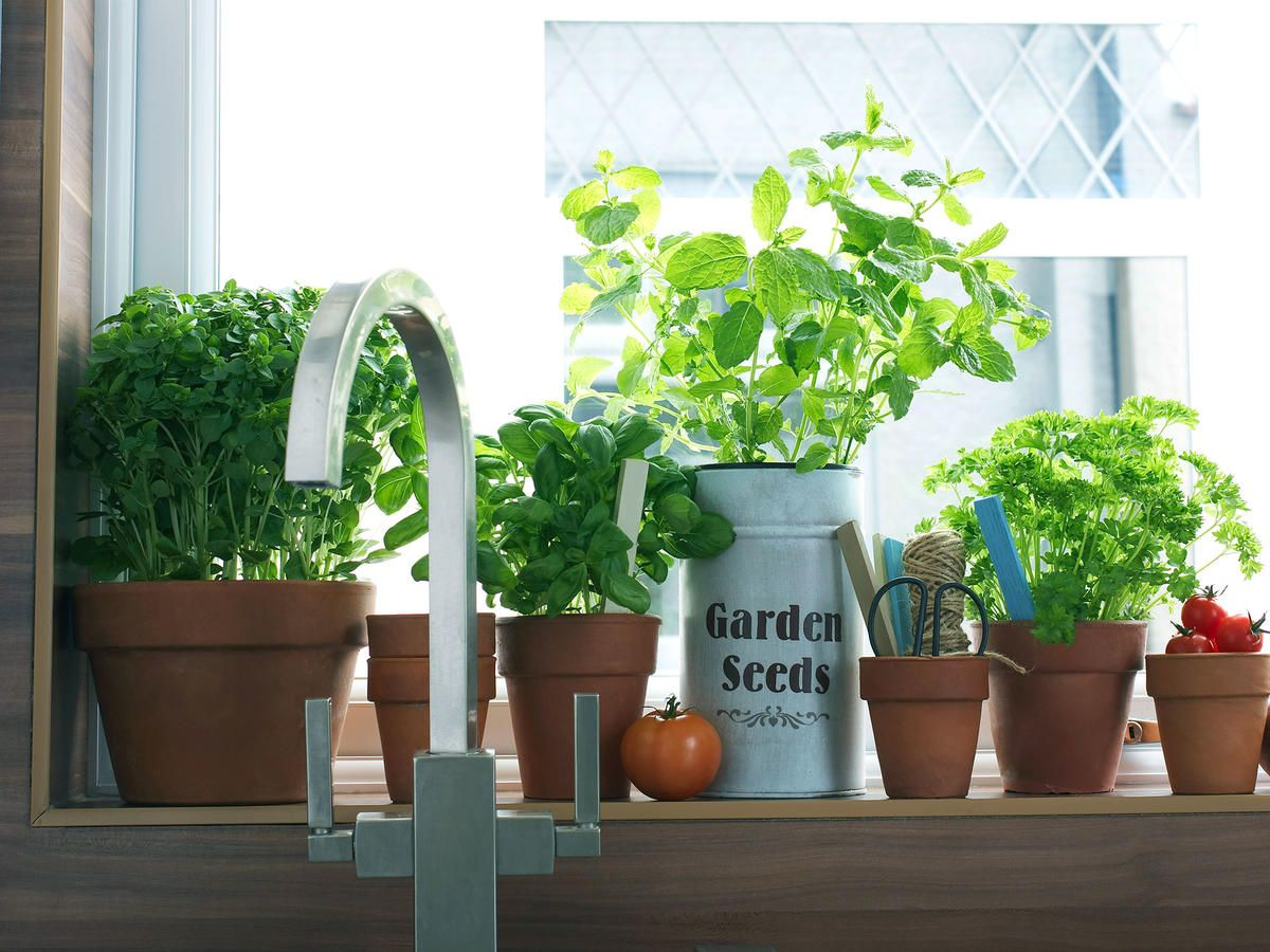 11 Fresh Herbs Every Home Cook Should Use Herbs, Herb