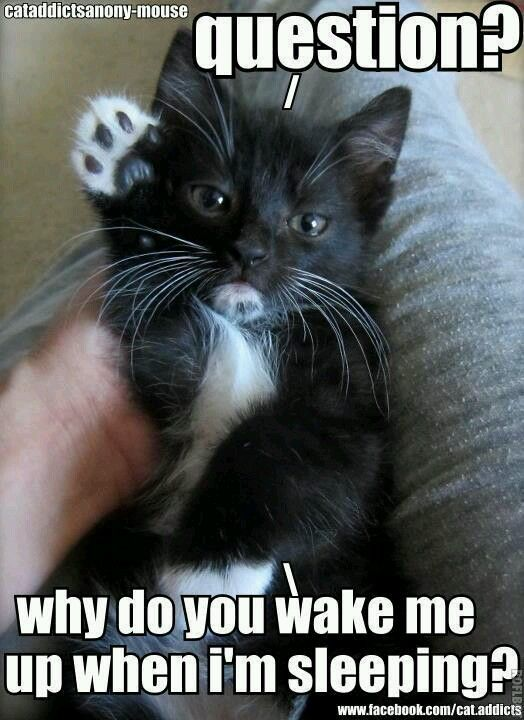 Because You Re Just So Darn Cute When You Re Sleeping And Because You Have No Problem Waking Me Baby Cats Funny Cat Pictures Funny Cat Memes