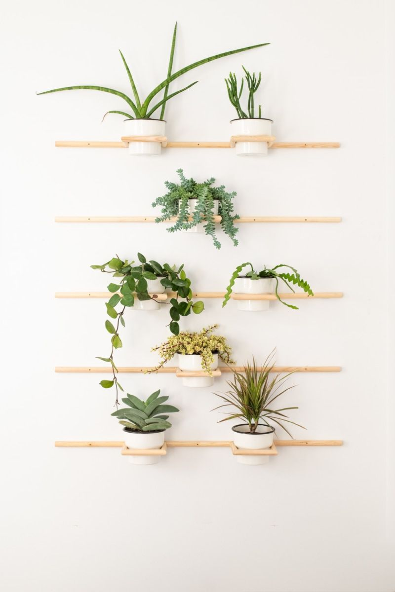 DIY plant wall ideas