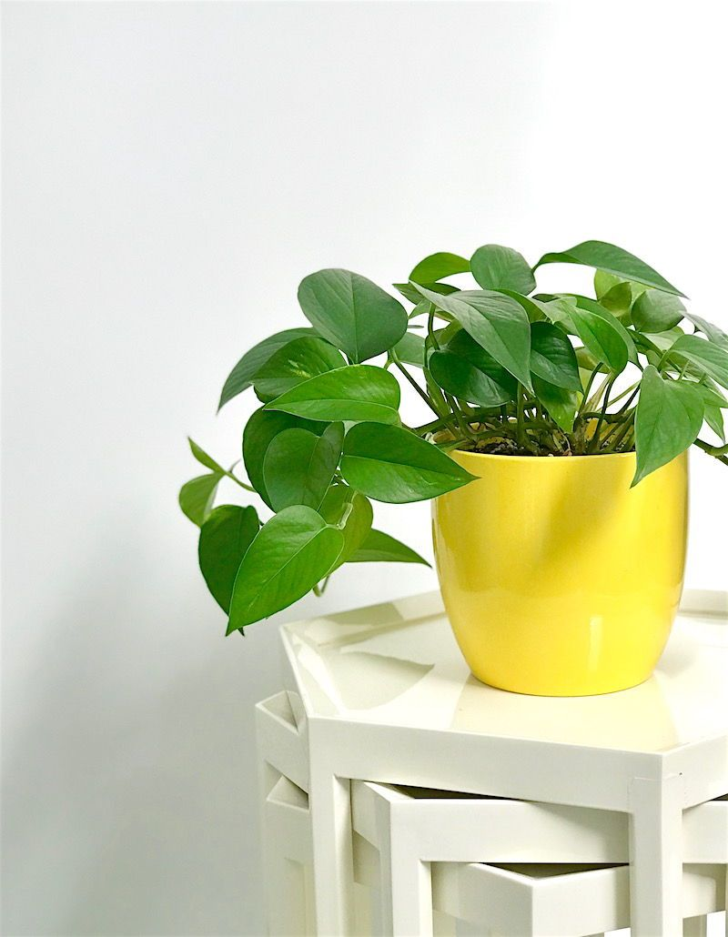 Gardening 101 Tips For Hy Houseplants