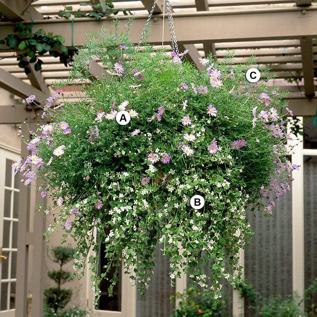 25 Hanging Baskets You'll Want to Plant Immediately #hangingbaskets