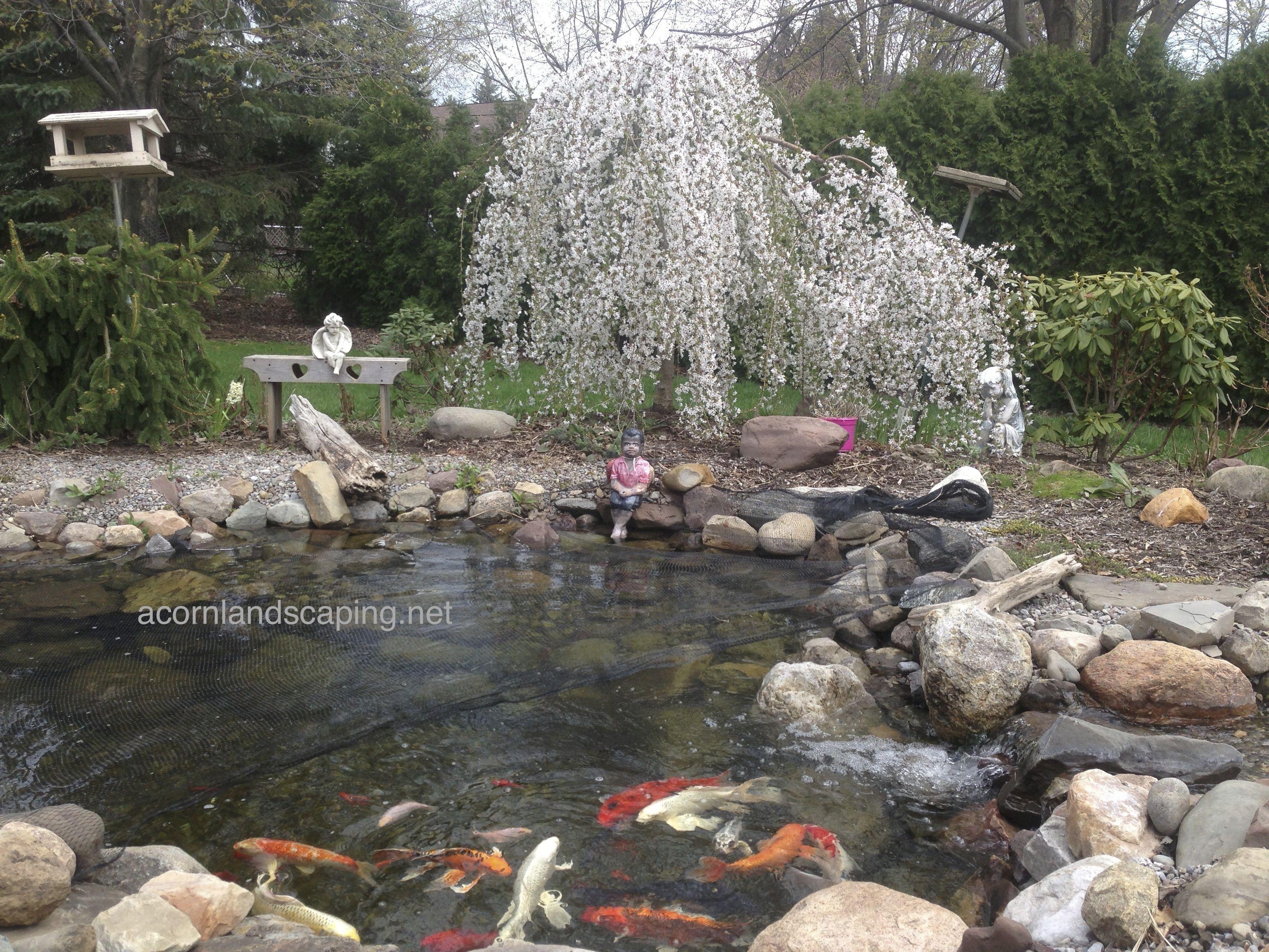 Backyard pond maintenance rochester ny acorn ponds for Garden pond maintenance