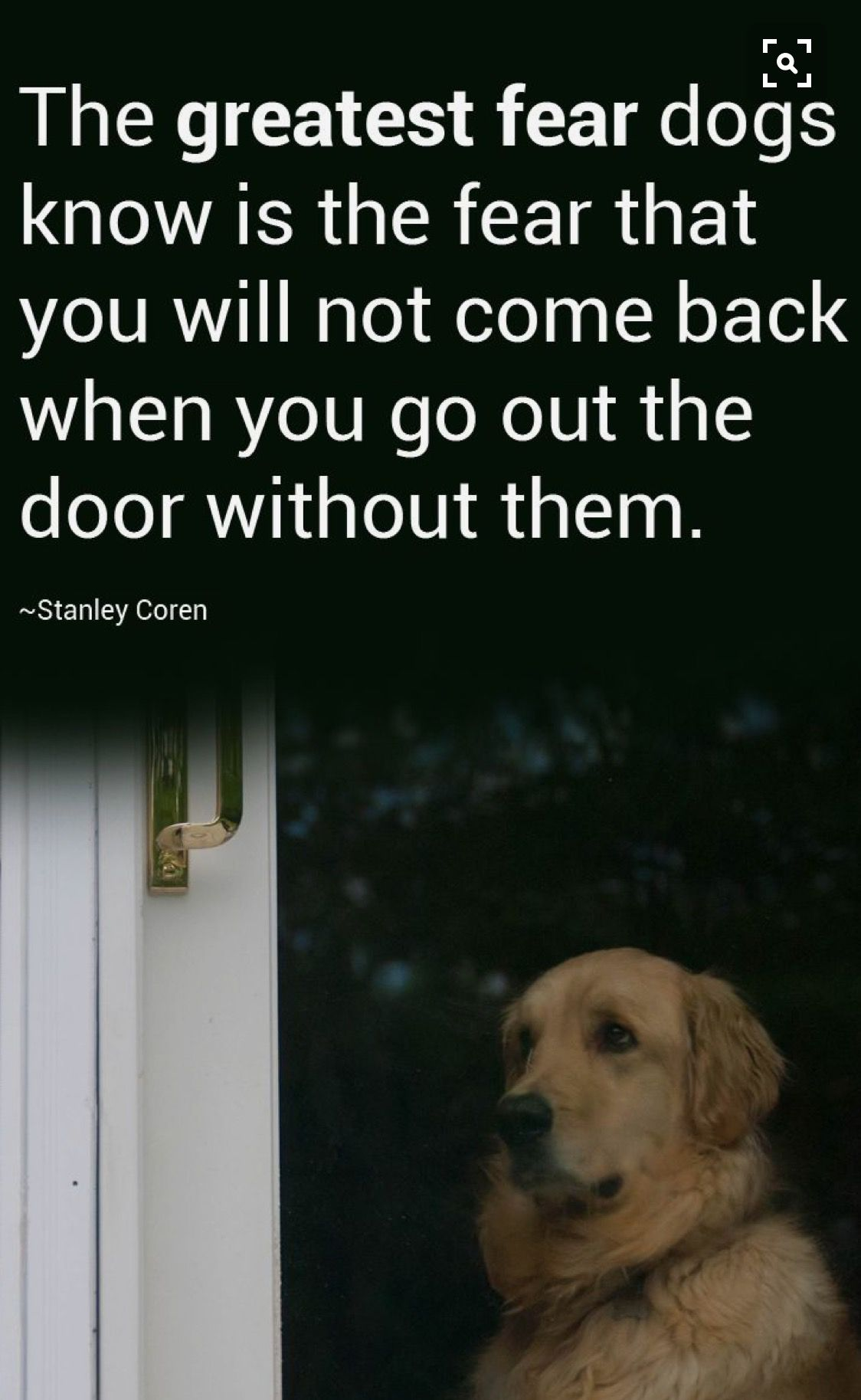 Please don\'t leave them in the back yard to languish, they want to ...