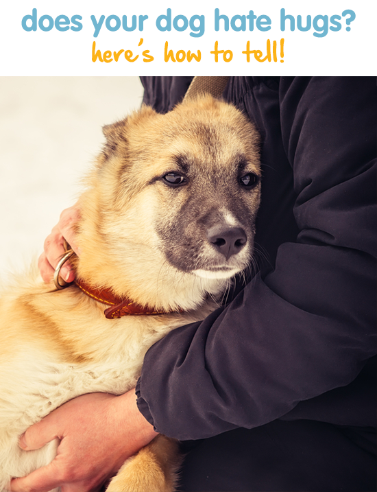 Does Your Dog Hate Hugs Here S How To Tell Dogs Dogs Hugging Your Dog