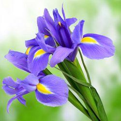 Langage des fleurs & symbole des fleurs | Interflora