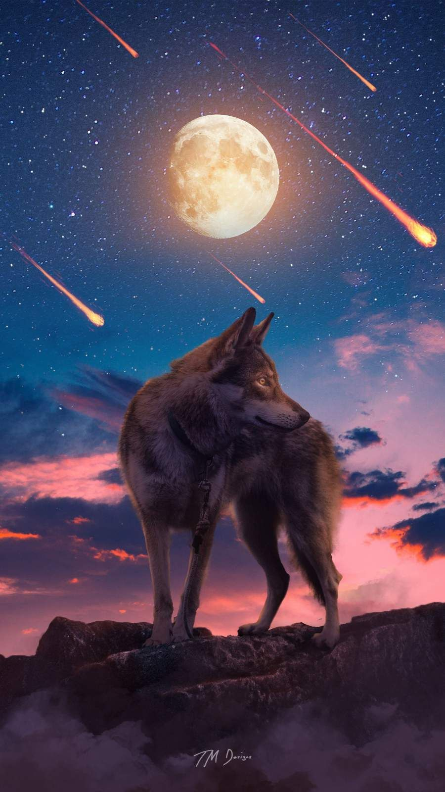 Iphone Wallpapers For Iphone 12 Iphone 11 Iphone X Iphone Xr Iphone 8 Plus High Quality Wallpapers Ipad In 2021 Wolf Spirit Animal Wolf Wallpaper Wolf Background