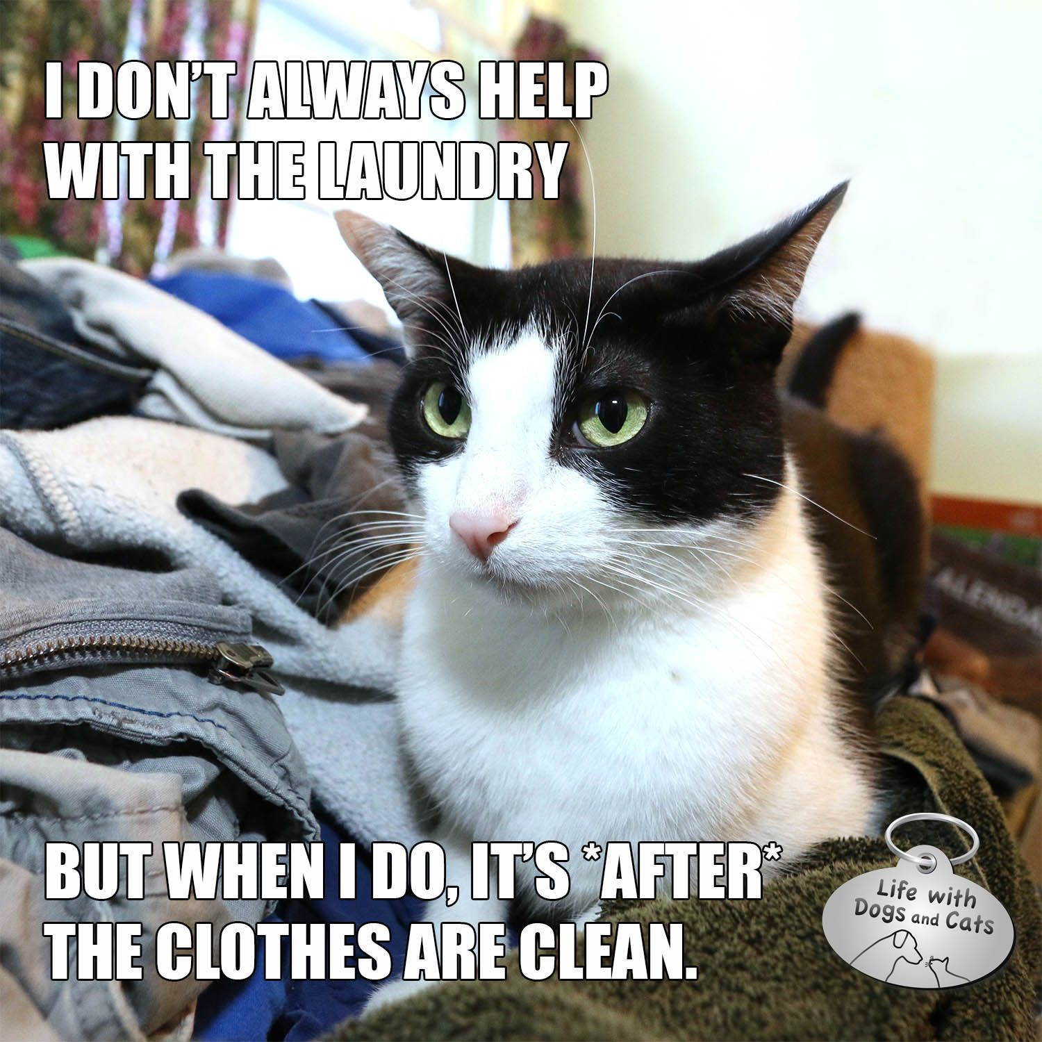 I Don T Always Help With The Laundry Mostinterestingcatintheworld Life With Dogs And Cats Funny Cat Memes Dog Cat Cats