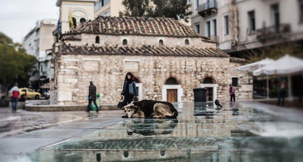 Los perros callejeros abundan en Atenas, tras la moda de adoptar una mascota, y la falta de sensibilidad ante el abandono.