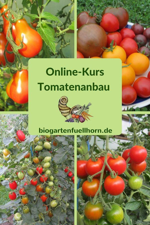 Anbau Von Tomaten Online Kurs Biogarten Fullhorn Tomaten Garten Tomatenanbau Biogarten
