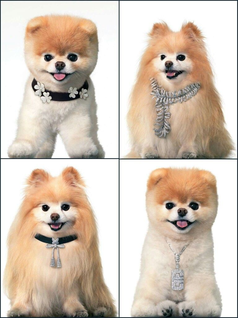 Pin by Lindy Knochel on Boo Boo the dog, Boo and buddy