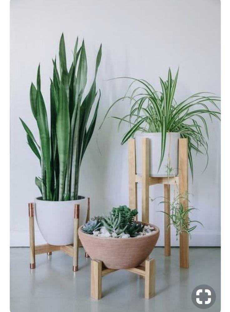 Photo of Indoor Planter, Wooden Plant Stand with Pot, Minimalist Planter and Pot, Mid Century Modern Stand