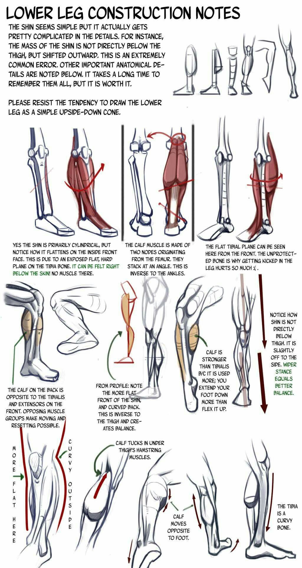 Pin de max max en Drawing | Pinterest | Anatomía, Tutoriales de ...