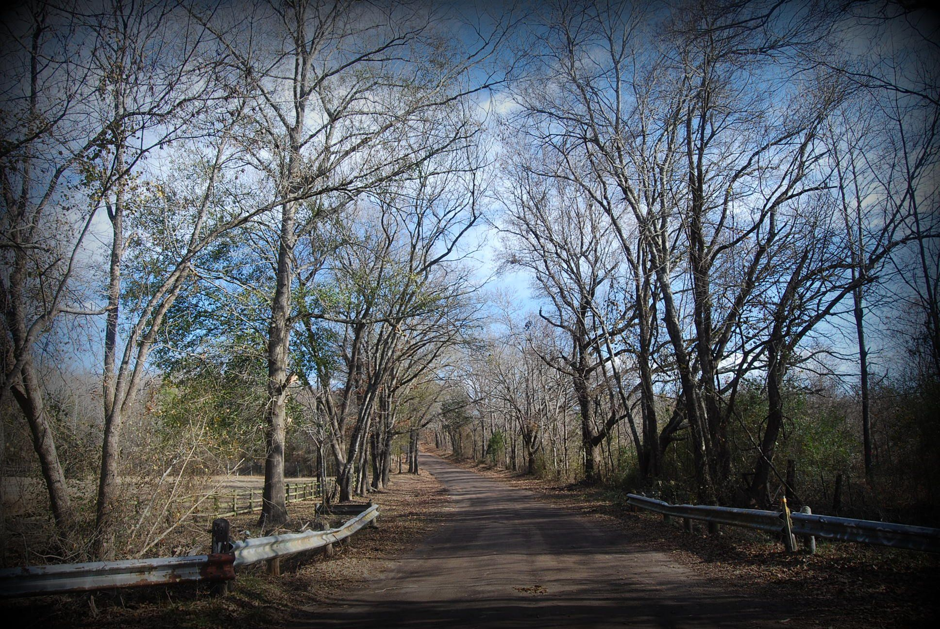 The road outside the Mineola Nature Preserve, taken by Stephanie Frazier.