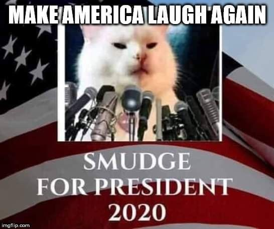 Pin By Izza On The White Cat Smudge And The Screaming Lady Stupid Funny Memes Funny Dog Memes Memes Sarcastic
