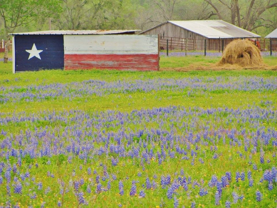 Texas Bluebonnets And A Texas Flag Barn Pic By Richard Crawford With Images Blue Bonnets Texas Bluebonnets Lone Star Flag