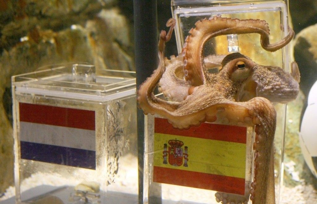 This photo shows Paul the Octopus making a prediction. May he rest in peace.