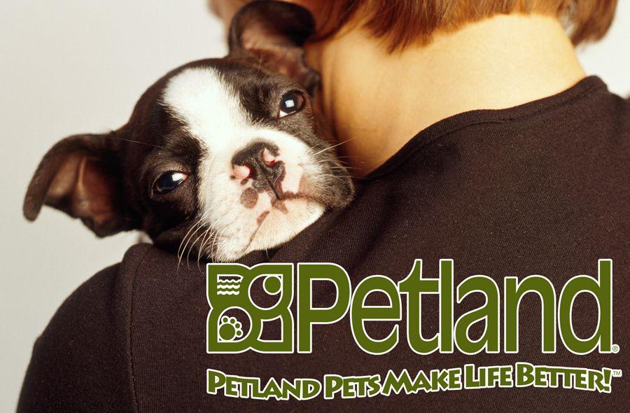 Petland Overland Park Pet Stores In Kansas Petland Overland Park City Pets Pet Store Buy Puppies