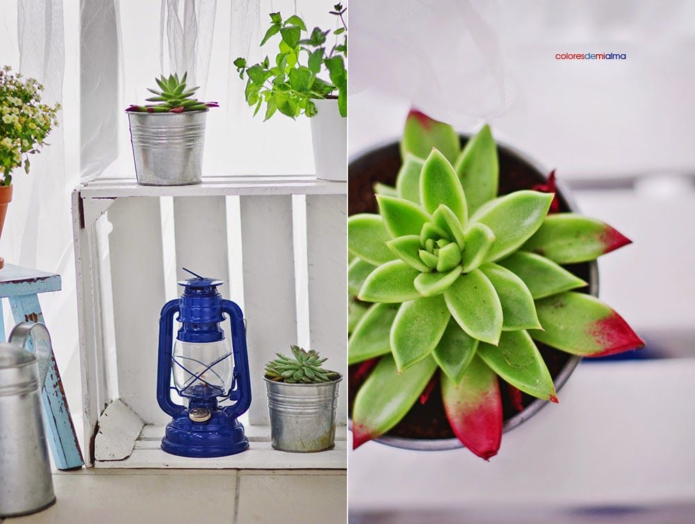 balcony, scandi interior , blue, white, natural ,marine ,succulents