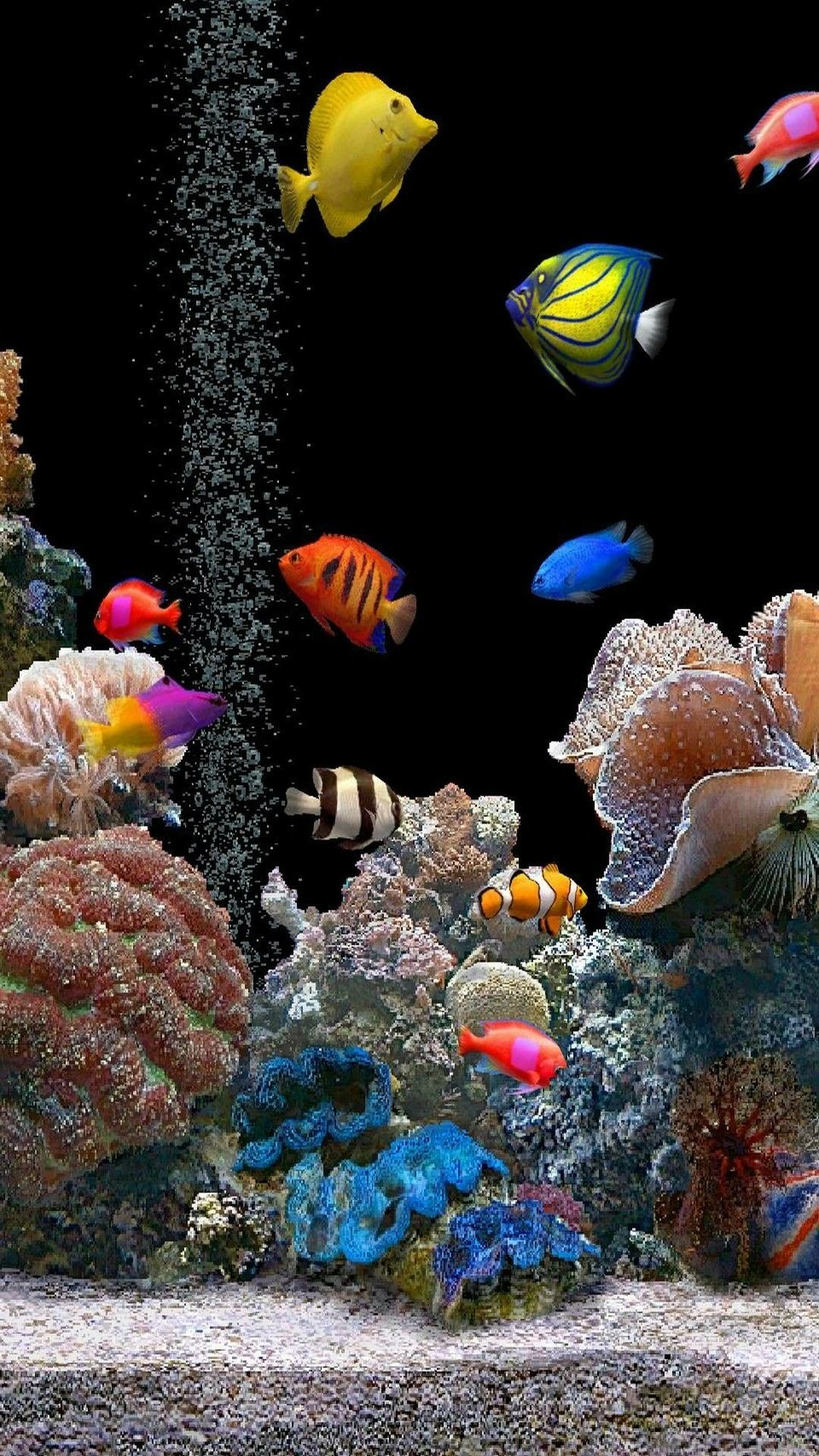 Different types of fish wallpaper Live fish wallpaper