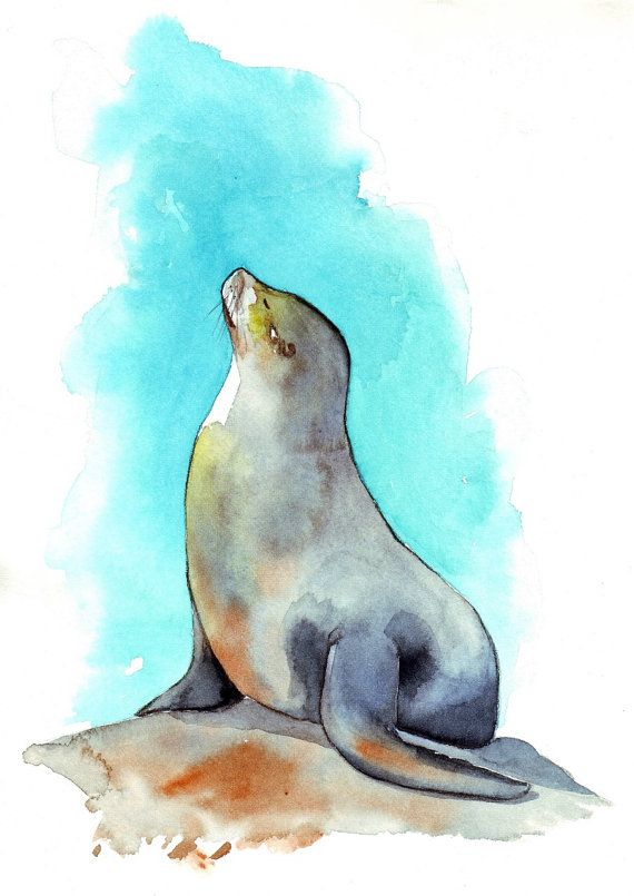 Seal Painting Animal Print Of Watercolor Painting By