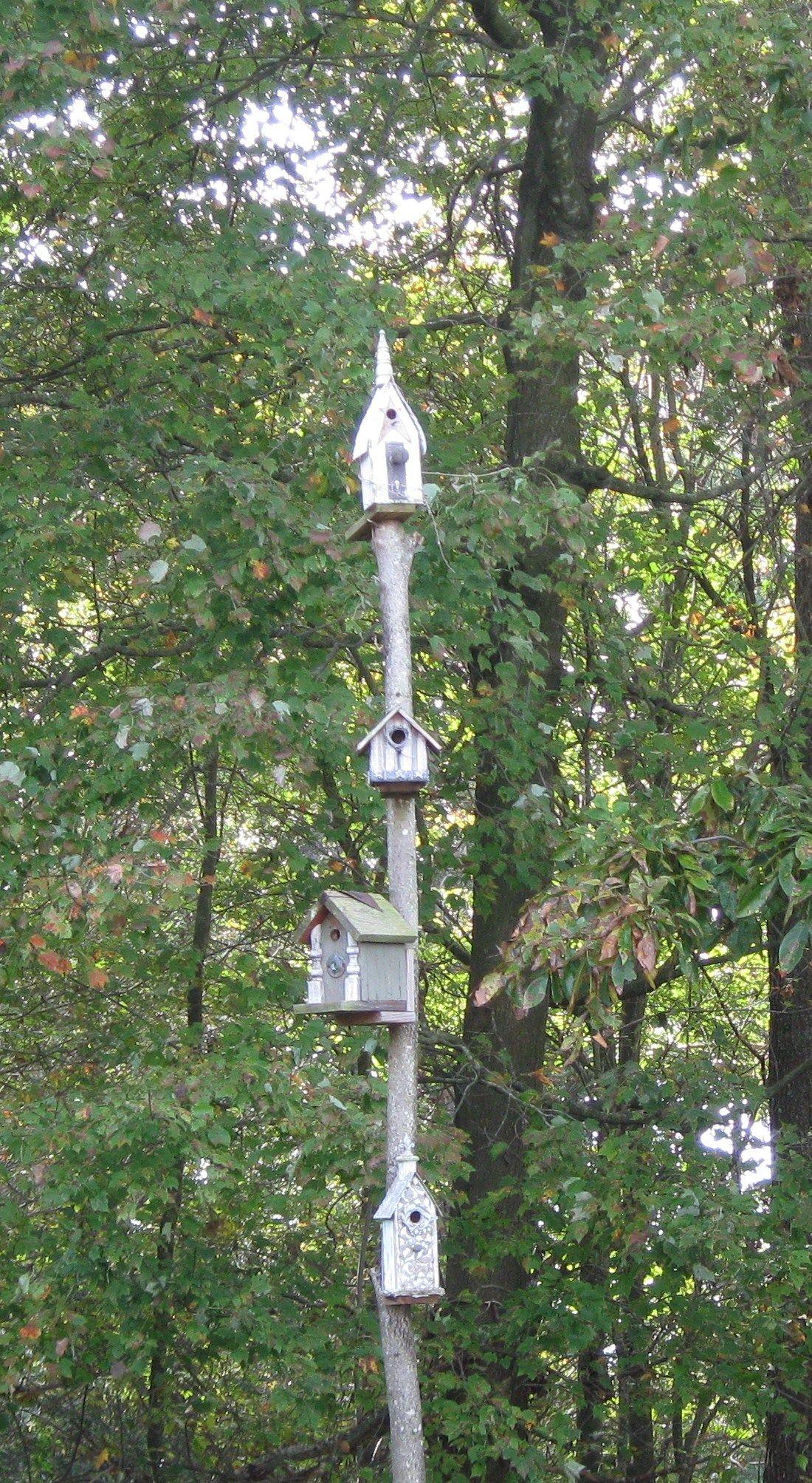 our birdhouse pole