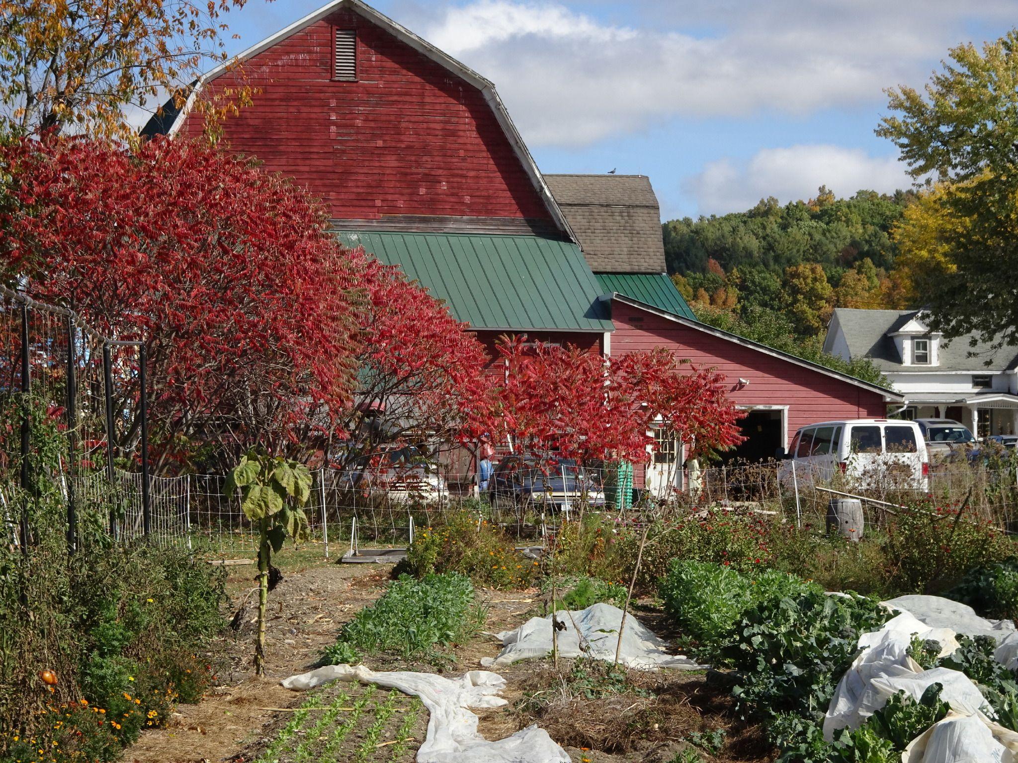 3rd Grade Farm Trip