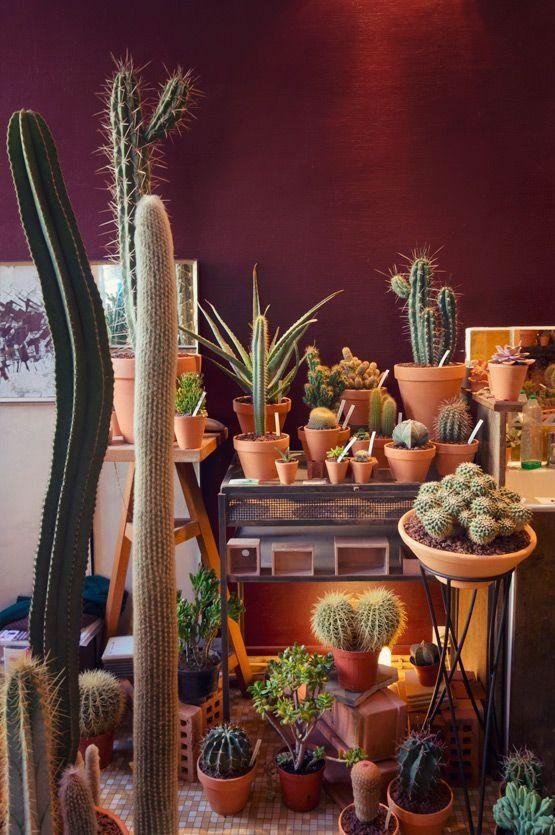 30 ideas para decorar con cactus y terrarios plantas y - Ideas para decorar macetas ...