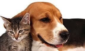 Afbeeldingsresultaat Voor Katten En Honden Pets Dogs Cute Animals