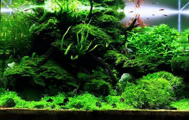 Plants Suitable for Aquascaping