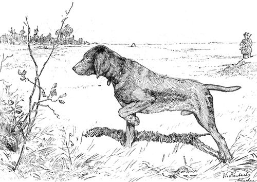 Coloring Page Hunting Dog Img 9762 Dog Coloring Page Dog Print Art Hunting Dogs