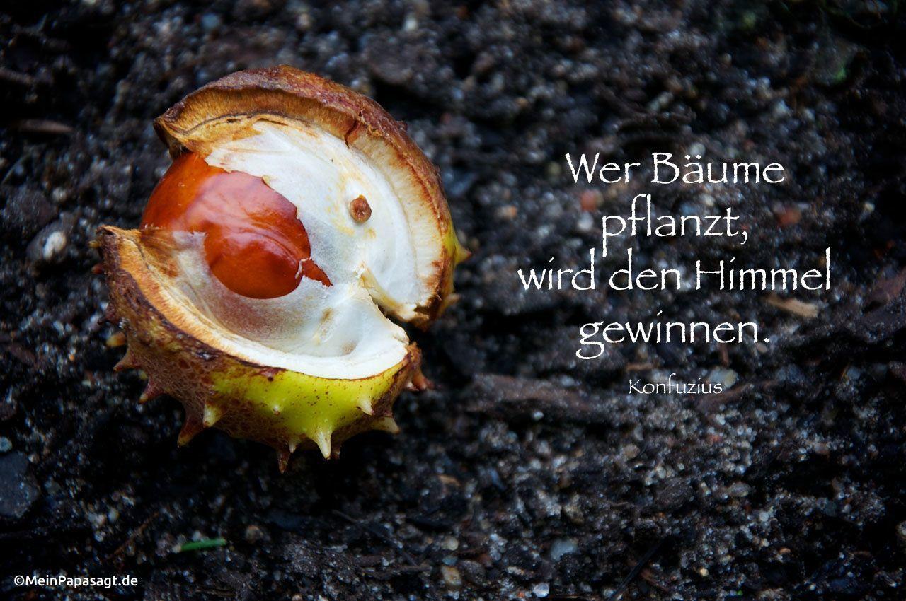 Mein Papa sagt... Wer Bäume pflanzt, wird den Himmel gewinnen. Konfuzius #zitate #deutsch #quotes     Weisheiten & Zitate TÄGLICH NEU auf www.MeinPapasagt.de