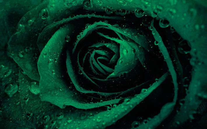 Pin By Svetik On Rozy Green Rose Green Flowers Green Aesthetic