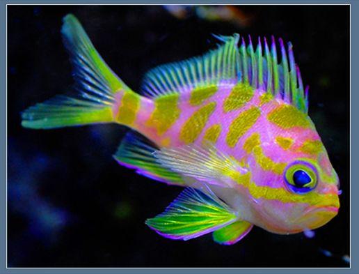 Colorful Fish Reef Safe Fish Marine Fish Salt Water Fishing