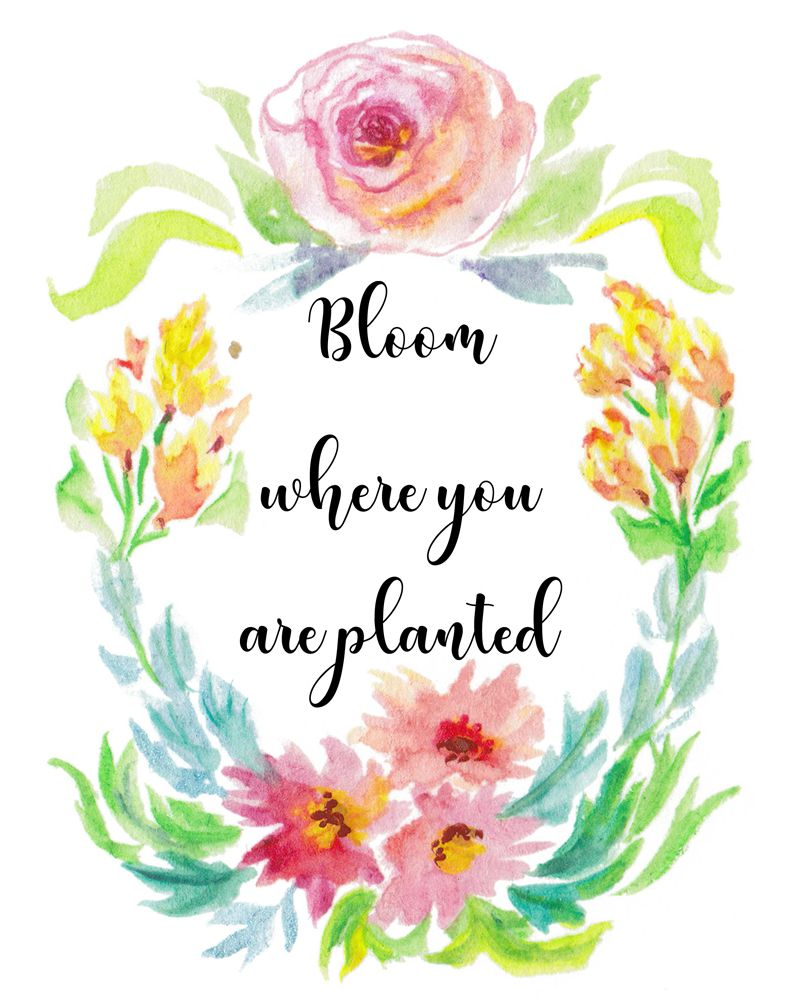 Bloom where you are planted optimistic ts instant