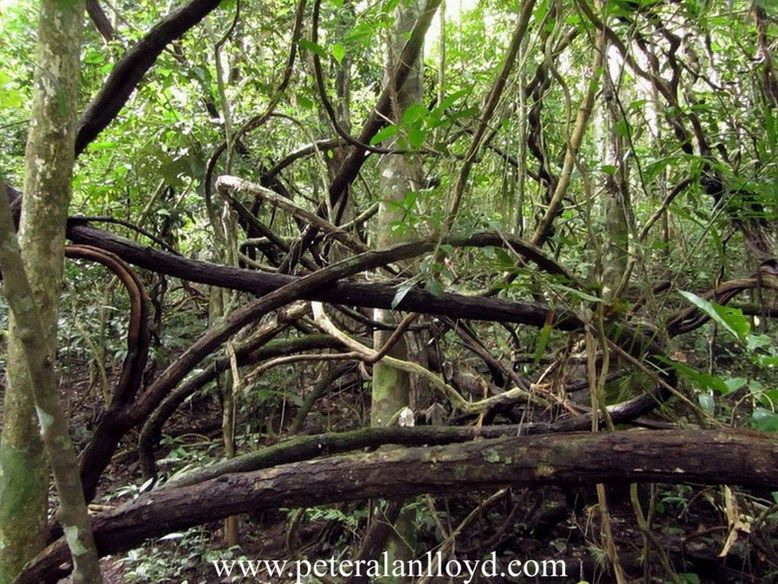 The Tangled Dense Jungle In The Tri Border Area Conceals Much From Prying Eyes Vietnam War Vietnam War