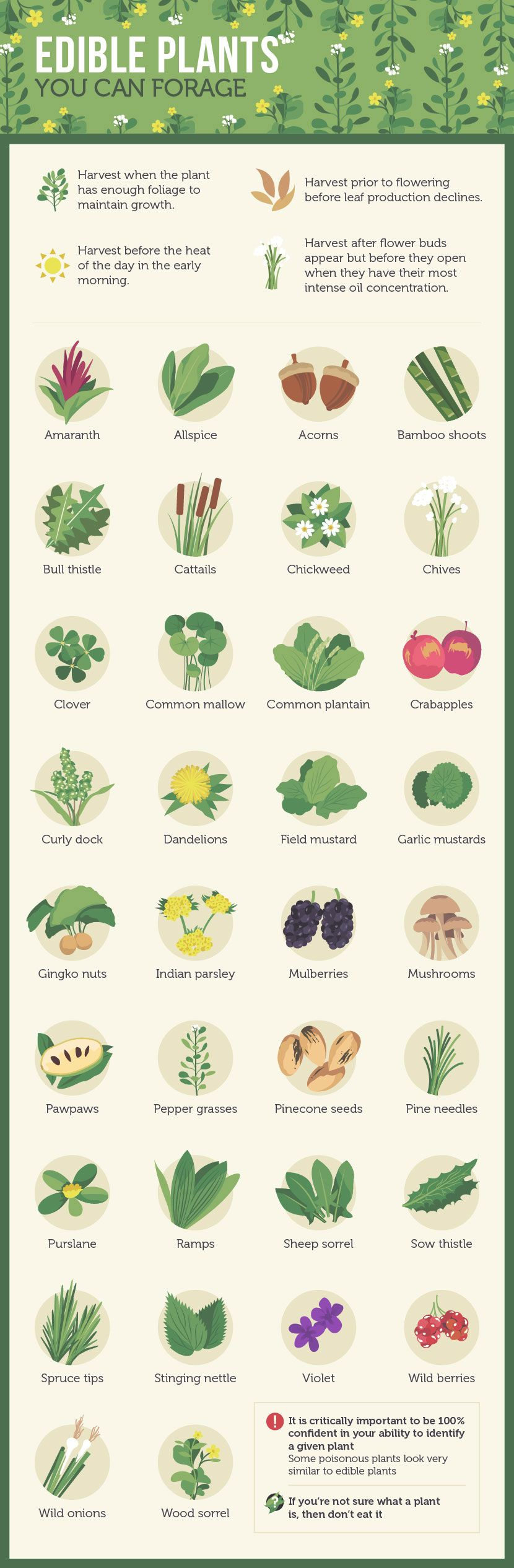 urban foraging the ultimate in local eating urban survival and