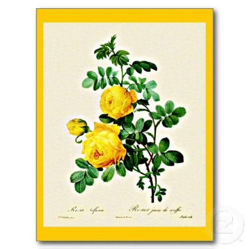 Postcard-Botanicals-Pierre Joseph Redoute 13