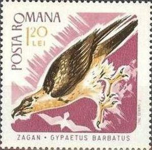 Bearded Vulture Gypaetus barbatus - Google zoeken