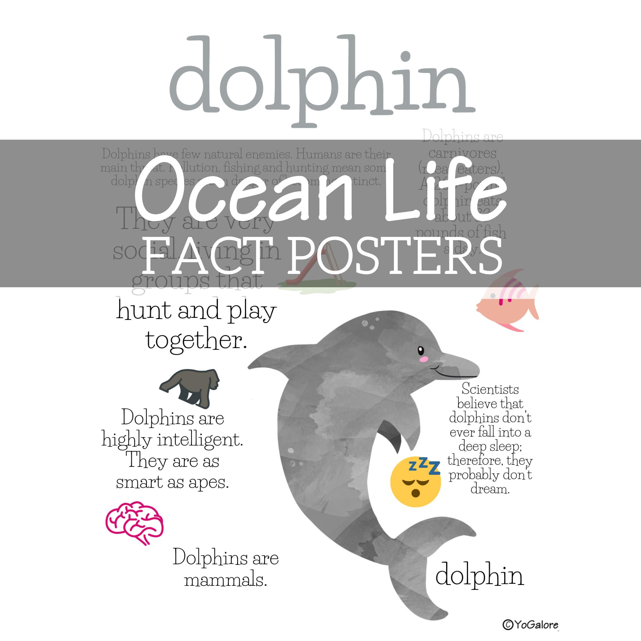 Ocean Life Fact Posters