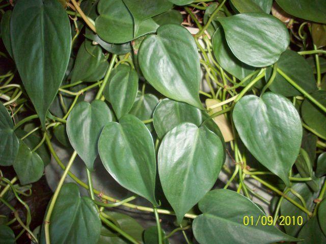 Charmant House Plants Photos | House Plants: Question On My Plant, Money Plant,  Reader
