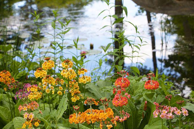 My Surprising Visit to the Coastal Maine Botanical Gardens ...