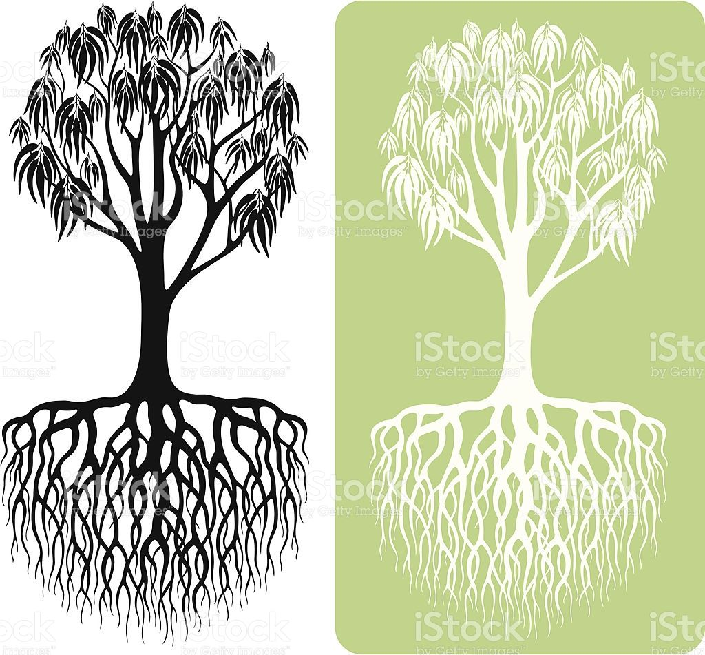 Eucalyptus Tree Silhouette With Intricate Roots In Two Options