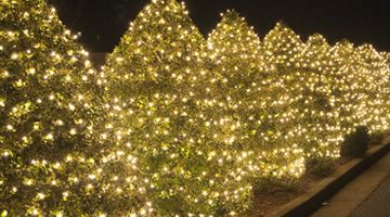 Wrapping trees with christmas lights pinterest christmas lights wrap bushes and hedges with christmas lights mozeypictures Choice Image